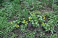 Flowers in the mud - geograph.org.uk - 764872.jpg