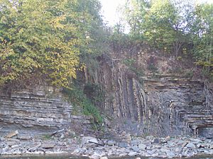 Fold (geology) - An asymmetric angular fold in Ukrainian Carpathians in Dora (near Jaremcze, Ivano-Frankivsk region, West Ukraine