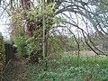 Footpath beside Newington Meadow - geograph.org.uk - 2159282.jpg