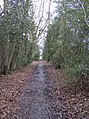Footpath in Stanford Wood - geograph.org.uk - 358382.jpg