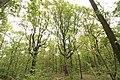Forêt Départementale de Méridon à Chevreuse le 29 septembre 2017 - 30.jpg