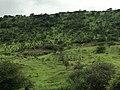 Forêt de Marena.jpg