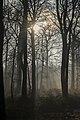 Forest atmosphere (31984709130).jpg