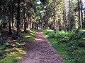Forest track, Sheepshaw Plantation - geograph.org.uk - 517327.jpg
