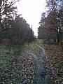 Forest walk brandon.jpg