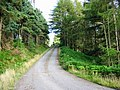Forestry Road - geograph.org.uk - 535476.jpg
