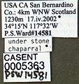 Formica francoeuri casent0005363 label 1.jpg