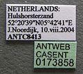 Formica lusatica casent0173858 label 1.jpg