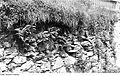 Fotothek df rp-a 0850025 Triebischtal-Rothschönberg. Bleymühle, Trockenmauer im Garten.jpg