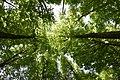 Frühling Baum Südschwarzwald.jpg