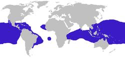 全球範圍分布
