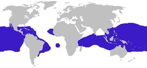 Fregata distribution.png