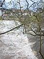 Frisches Lindgrün, Knospen bei Blattaustrieb am Grüner-Wehr, Lindenallee-Ufer Marburg-Weidenhausen 2018-04-14.jpg
