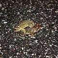Frogs (2654298902).jpg