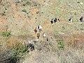 Gamla in Golan 12.jpg