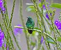 Garden Emerald JCB.jpg