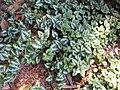 Gardenology.org-IMG 0416 rbgs10dec.jpg