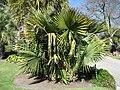 Gardenology.org-IMG 0529 hunt07mar.jpg