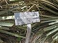 Gardenology.org-IMG 4444 hunt0904.jpg