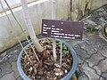 Gardenology.org-IMG 7782 qsbg11mar.jpg