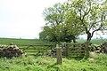 Gates and trees near Eglingham - geograph.org.uk - 834631.jpg