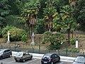 Genova-Liguria-Italy-Castielli CC0 HQ - panoramio - gnuckx (8).jpg