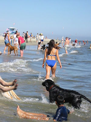 """Dog camp - One California beach has been declared as """"dog beach"""" where humans can bring their dogs; but leashes are still required. At dog camps, however, leashes are not normally required."""