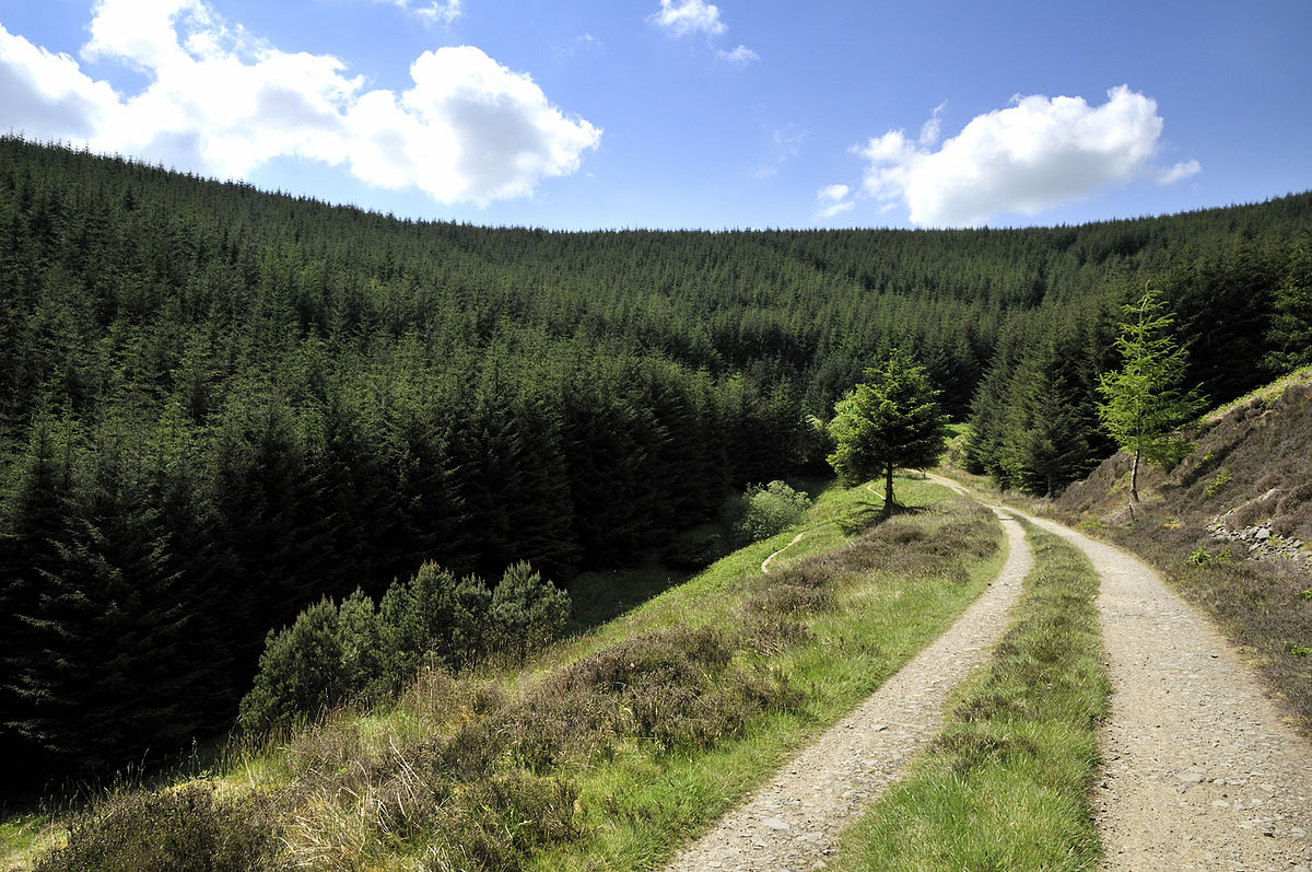 Glentress Forest - Wikipedia