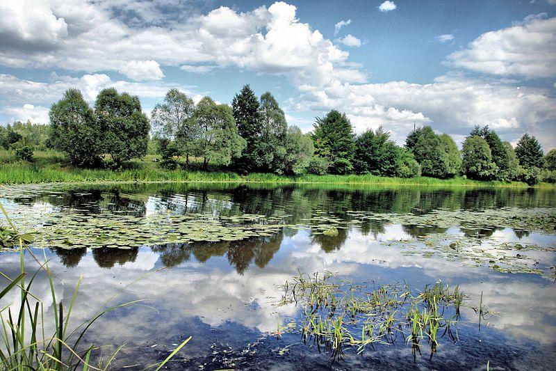 Сеймський регіональний ландшафтний парк. Автор фото — Nickverpovsky, ліцензія CC-BY-SA-4.0
