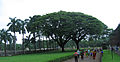 Goa - Basilica of Bom Jesus, views inside and around29.JPG