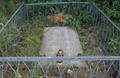 Grób nieznanego żołnierza radzieckiego.PNG