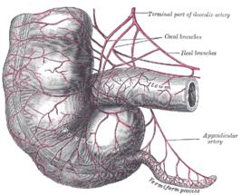 symptomen appendix ontsteking