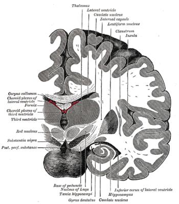 pr u00e9sentation de la neurologie et du syst u00e8me nerveux