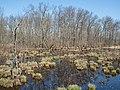 Great Swamp (63620).jpg