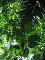 Green Light - Flickr - treegrow.jpg