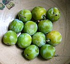 140px-Greengages Fruit Trees - Plum Trees - Prunus domestica