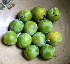 Recently harvested Greengages