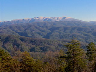 Gregory Bald mountain in United States of America