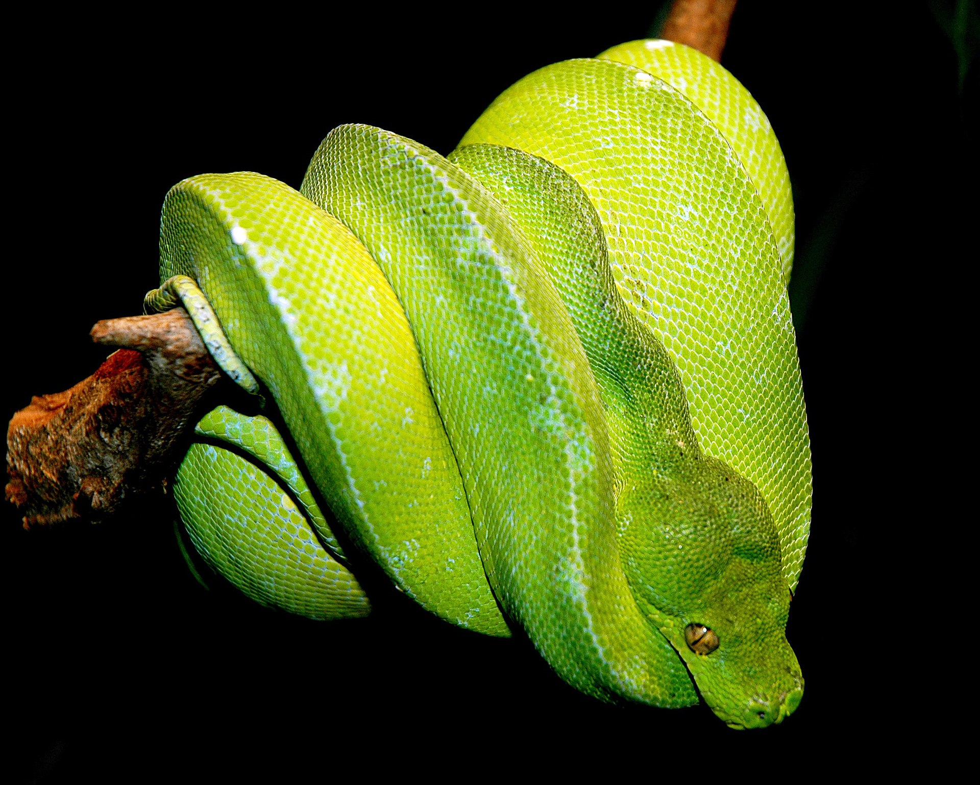 python vert � wikip233dia