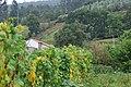Guriezo, Cantabria, Spain - panoramio (17).jpg