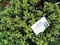 HK ML 半山區 Mid-levels 堅尼地道 Kennedy Road 香港公園 Hong Kong Park flora green leaves February 2020 SS2 09.jpg