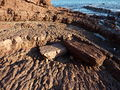 Hallett Cove Conservation Park P1000894.jpg
