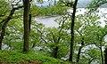 Hallinhag Wood, Ullswater - geograph.org.uk - 173530.jpg
