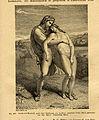 Handbuch der Sexualwissenschaften p509.jpg