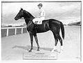 Harry Watts astride Tartarean after winning the King's Plate (1915).jpg