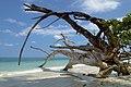 Havelock Island, Tropical beach and trees, Andaman Islands.jpg