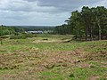Heathland, Longmoor Camp - geograph.org.uk - 439667.jpg