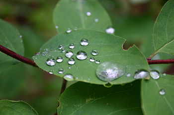 Heavenly Dews Grace Broken Leaf Imperfect Life.JPG
