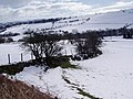 Hedgerow - geograph.org.uk - 133162.jpg