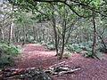 Helsby Hill (65).JPG